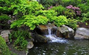 Обои калифорния, miller japanese garden, сад, кусты