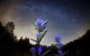 Картинка космос, звезды, цветы, ночь