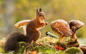 Картинка трава, ягоды, животное, птица, грибы, белка, рябина, зверёк, грызун, синица