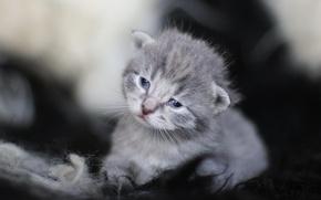 Обои глазки, мордочка, котенок, малыш