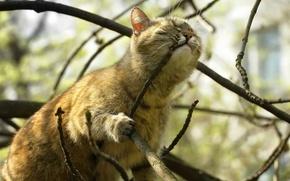 Обои дерево, ветка, кот