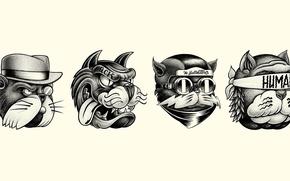 Картинка Минимализм, Юмор, Арт, Art, Коты, Minimalism, Cats, Hello Shane