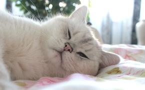 Картинка белый, глаза, кот, солнце, настроение, животное, день, голубые глаза, няша