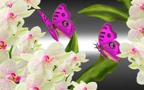 Картинка цветы, коллаж, бабочка, орхидея