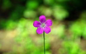Картинка природа, фон, минимализм, растения, Цветок