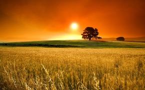 Картинка поле, солнце, горизонт, колоски