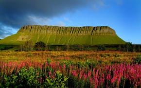 Картинка небо, трава, деревья, цветы, тучи, луг, Ирландия, Столовая гора, Бен Балбен