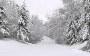 Обои дорога, снег, деревья, Зима