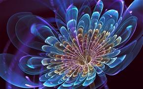 Картинка цветок, синий, лепестки, арт, art