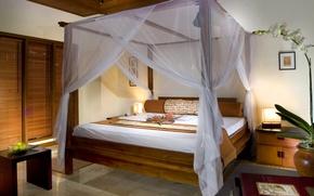 Картинка цветок, кровать, спальня, шатер, шкаф-купе, альков
