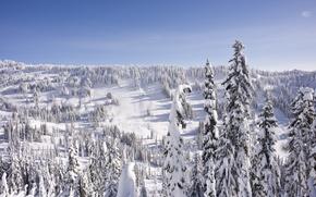 Обои зима, лес, холмы, снег, ель, елка, небо