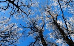 Картинка дерево, ветки, снег