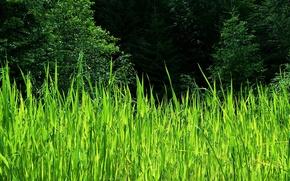 Обои лето,  деревья,  камыш,  зелень