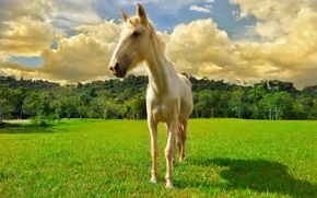 Картинка поле, небо, облака, лошадь