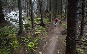 Картинка лес, природа, спорт, велосипедист, mountain bike