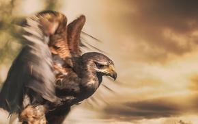 Картинка ветер, птица, орёл