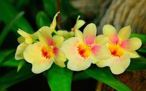 Картинка листья, макро, лепестки, орхидея