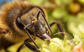 Картинка цветок, пчела, насекомое