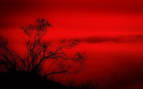 Обои красный, дерево, пейзаж