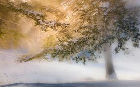 Картинка зима, свет, снег, деревья, солнечный