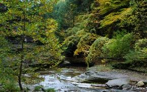 Картинка Осень, Лес, Ручей, USA, США, Fall, Autumn, Colors, River, Forest, Итака, İthaca