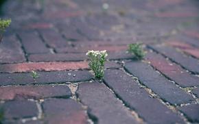Обои цветок, камни, росток, мостовая