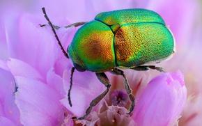 Картинка макро, цветы, зеленый, жук, блестящий, обои от lolita777