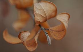 Картинка осень, листья, макро, веточка, macro
