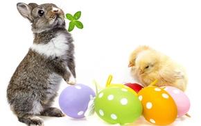 Картинка цыплята, яйца, кролик, пасха, spring, easter, bunny