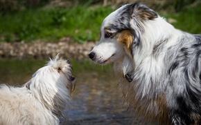 Картинка собаки, пара, профиль, друзья