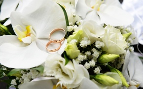 Картинка цветы, розы, кольца, орхидея, свадьба, White, Orchid, Ring