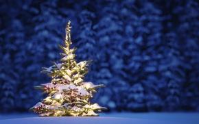 Картинка lights, елка, Новый Год, Рождество, Christmas, night, winter, snow, tree