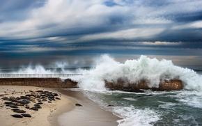Картинка волны, пляж, чайки, Калифорния, пирс, США, Сан Диего, морские котики, Сил Бич, тюлени