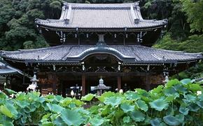 Обои Япония, Лес, Храм