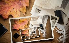 Картинка осень, лист, перо, плёнка, свадебное фото