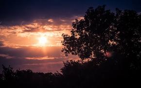 Картинка солнце, облака, деревья, вечер, сумерки