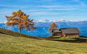 Картинка осень, горы, дом, дерево, Альпы, Италия, Южный Тироль