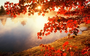 Картинка осень, листья, солнце