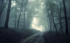 Картинка туман, страх, мрак, человек, Лес, призрак, непредвиденность