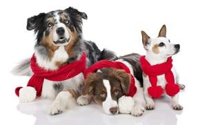 Картинка праздник, Новый Год, Рождество, Christmas, New Year, dogs