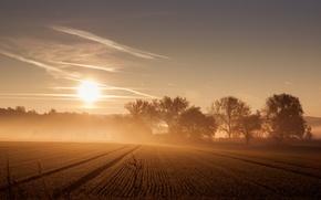 Картинка поле, природа, туман, утро
