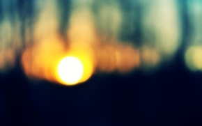 Картинка лес, солнце, деревья, закат