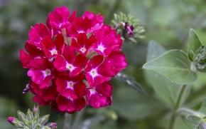 Картинка макро, цветы, фото