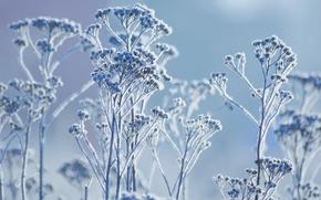 Обои иней, макро, растение, зима