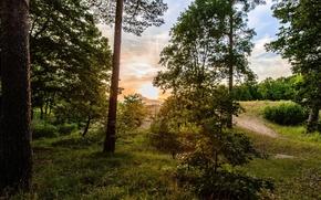 Картинка лес, солнце, природа, утро