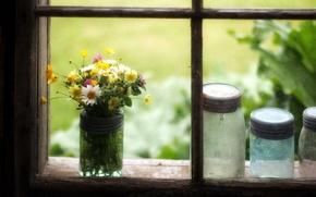 Картинка цветы, окно, банки