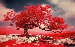 Картинка трава, горы, дерево, скалы, краски, фильтр