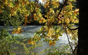 Картинка осень, листья, природа, река, дерево, ветви, желтые, Nature, river, autumn, leaves, tree, fall