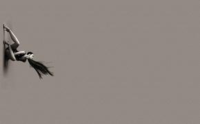 Картинка волосы, минимализм, женщина-паук
