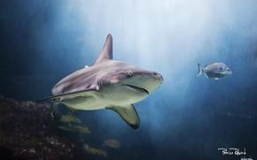 Картинка аквариум, акула, подводный мир, аквапарк